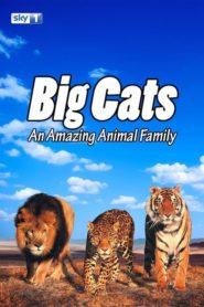 Big Cats: An Amazing Animal Family