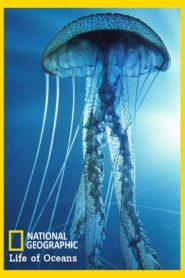 Life of Oceans